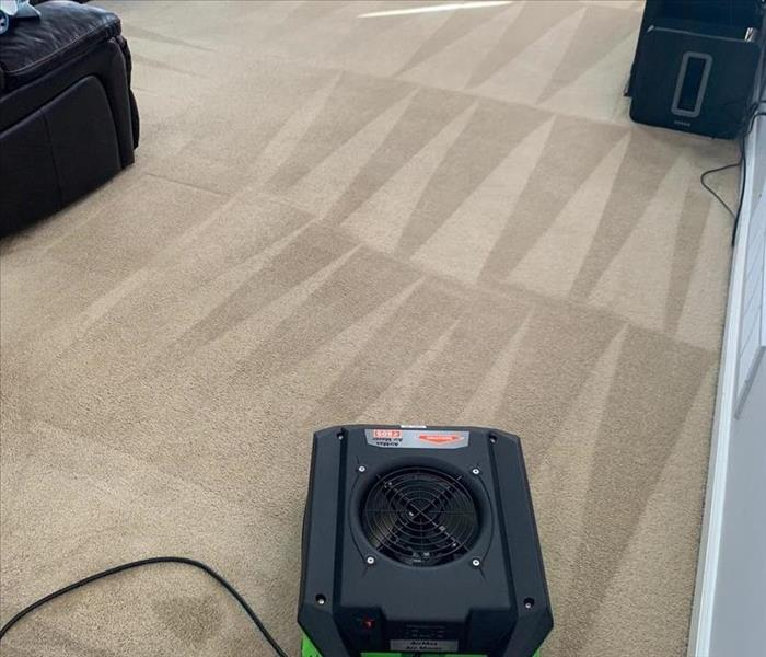 carpets after being cleaned with air mover